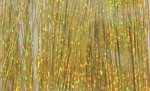 Flashabou - holografisk Holo yellow