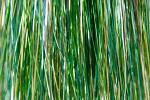 Flashabou - ocean green