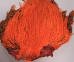 Indisk tuppnacke - Orange