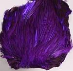 Indisk tuppnacke - Purple