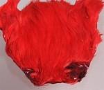 Indisk tuppnacke - Röd