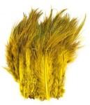 Ringneck Rump Bleached, Golden
