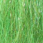 Sss Angel hair - hot greenlander green