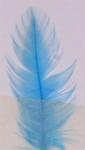 Veniard färg för fjäder - Light Blue (Camebridge)