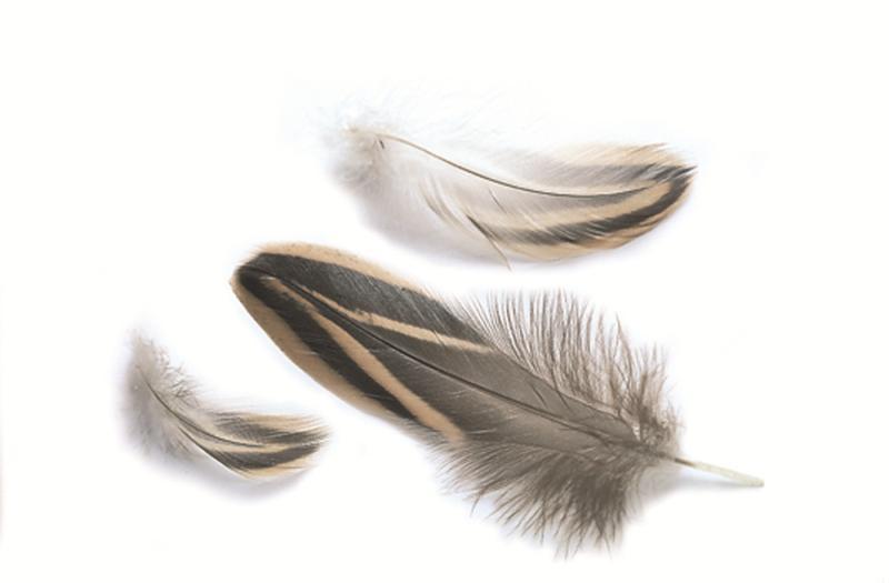 Gräsand - E12-fjädrar större