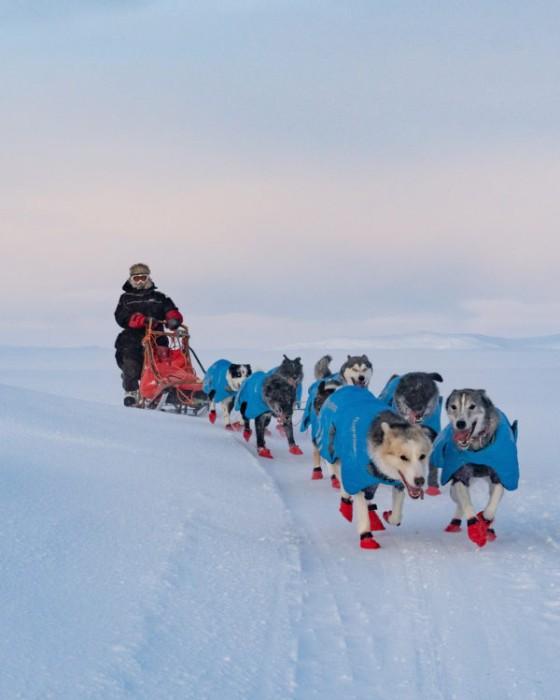 Non-Stop Anojakka Tundra