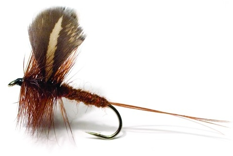 Rocken Dark Brown Daiichi 2220 # 10